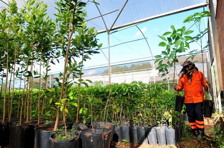 Executado o plano anual de arborização para todo o Distrito Federal. No período 2015 a 2017, a Novacap plantou cerca de 250 mil mudas de espécies nativas do cerrado. Além disso, a companhia produziu em seus viveiros 334.246 unidades de espécies arbóreas e 31.961 unidades palmáceas.