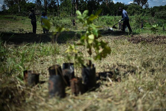 Plantadas 8.200 mudas para neutralização do carbono emitido nas atividades da Virada do Cerrado, edições 2016 e 2017.</p> Na edição de 2016 foram 4.200 mudas e em 2017, 4.000 mudas.