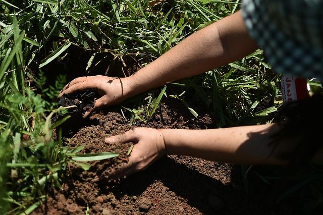 Plantadas 8.200 mudas para neutralização do carbono emitido nas atividades da Virada do Cerrado, edições  2016 e 2017. Na edição de 2016 foram 4.200 mudas e em 2017, 4.000 mudas.