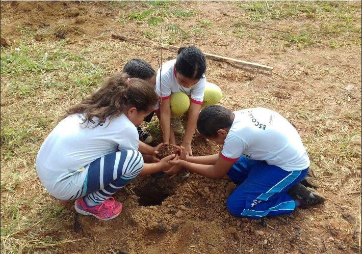 Plantadas, em 2017 e 2018, 74 mil mudas de espécies nativas do cerrado nas margens dos córregos Guará e Riacho Fundo, sendo 67 mil no Parque das Aves e 8 mil na Área de Relevante Interesse Ecológico - ARIE Santuário da Vida Silvestre do Riacho Fundo.